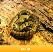 reptiles-ok