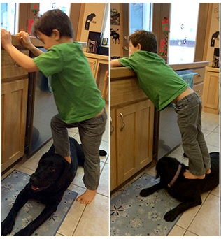 Sarah Palin Allows Son to Trample Black Dog