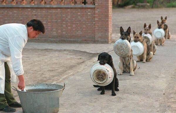 Police Dogs Wait For Dinner in China