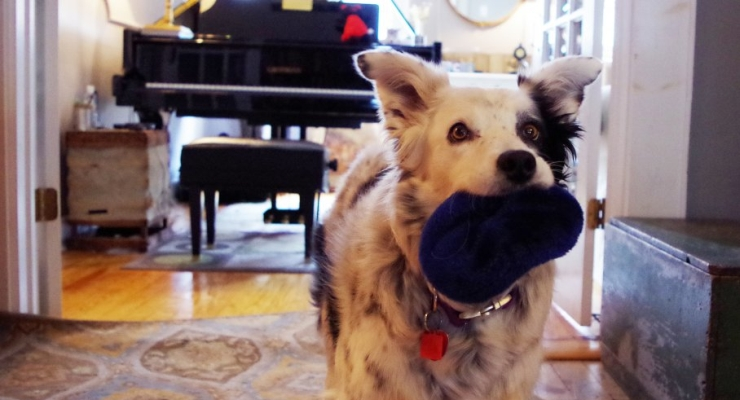 Meet Chaser the World's Smartest Dog