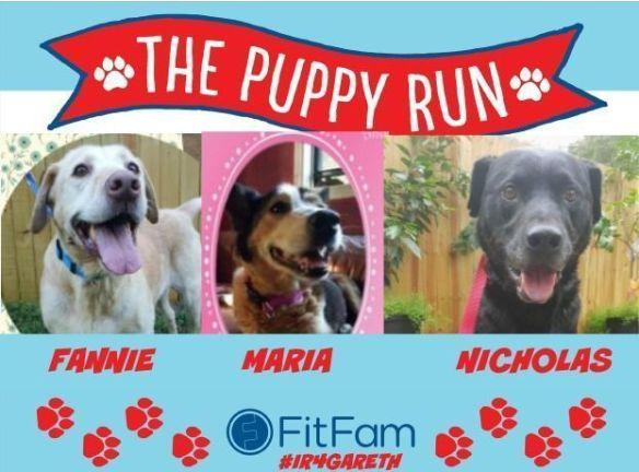 Dog Rescue Virtual Run