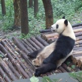 Just chilling (Chengdu, China)