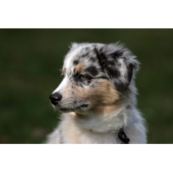 Small Crop Of Low Maintenance Dog Breeds