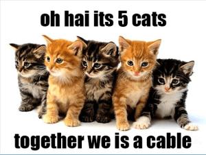 cat-five