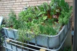 Dark Aquaponics Aquaponics Brite Ideas Hydroponics Organicsbrite Home Garden System