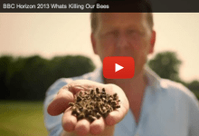 What's killing our bees