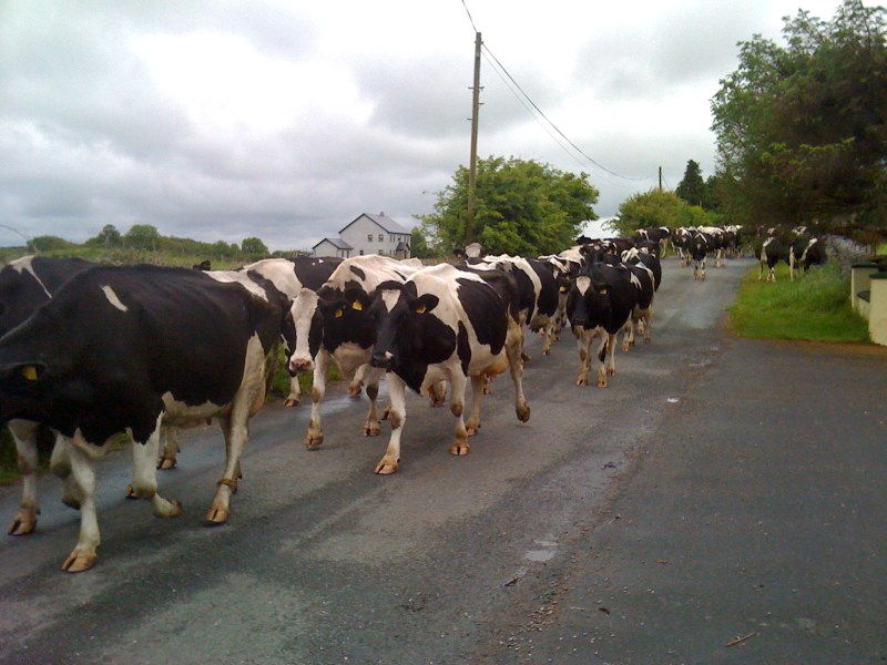 Irish Cow Jam