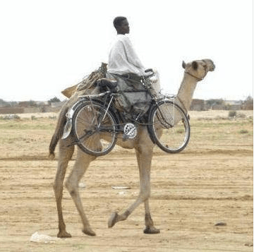 Mountain Bike (and rider) Carrying Camel