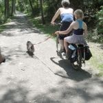 The whole family heads down the rec way to the swimming hole. I am carrying 120-pound Jasper on my bike.