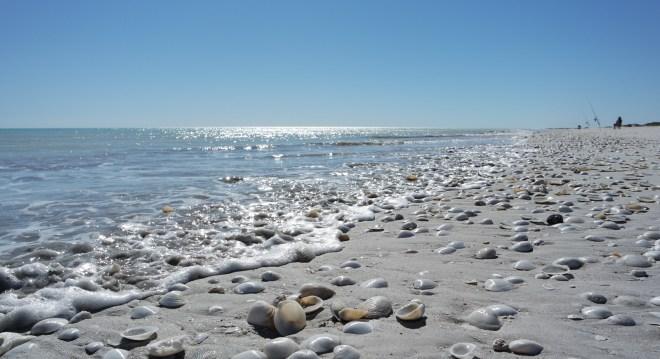 90 Mile Beach - ein Paradies für Muschelsammler! - fotografiert von Mamarazzi
