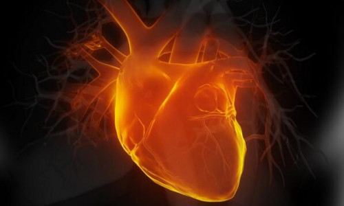Lab-grown human heart cells could mean fewer animals used in research