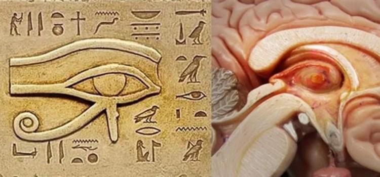 oko-szyszynka