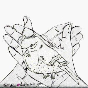 finch in my hands