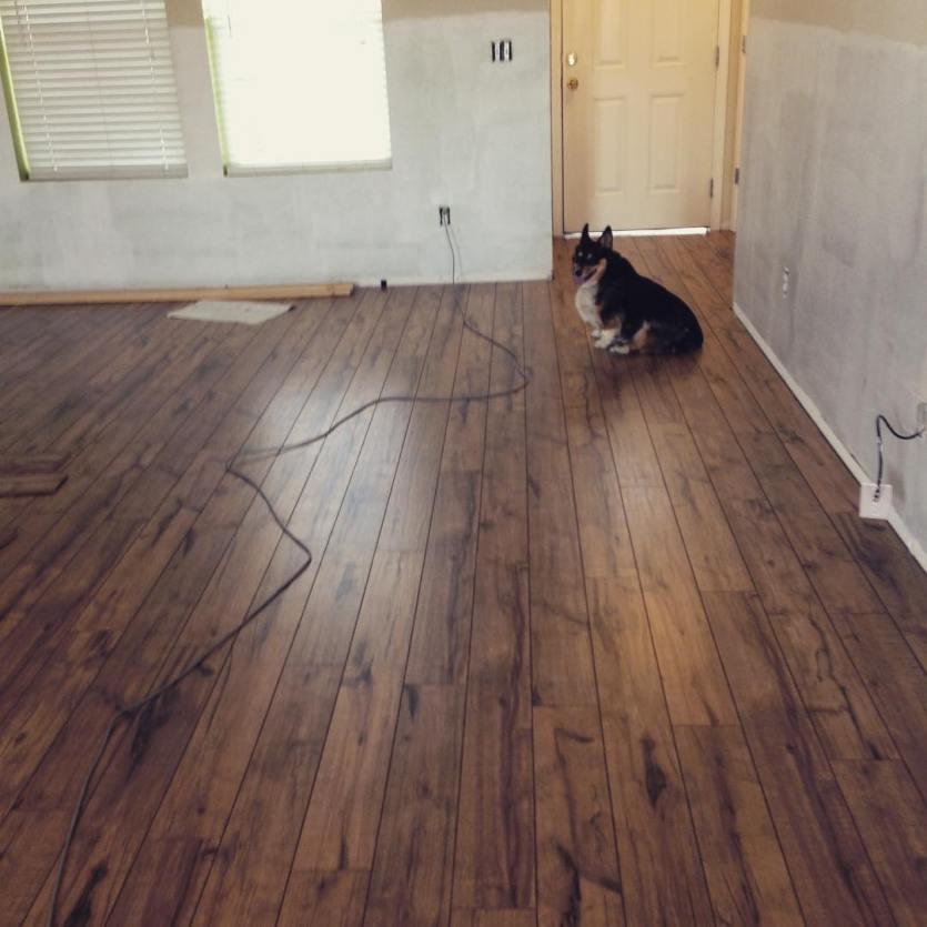 Piper loves the new floors.