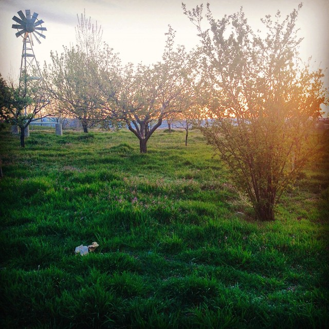Sun's setting, orchard's blooming, ditch is flowing, birds are singing,…