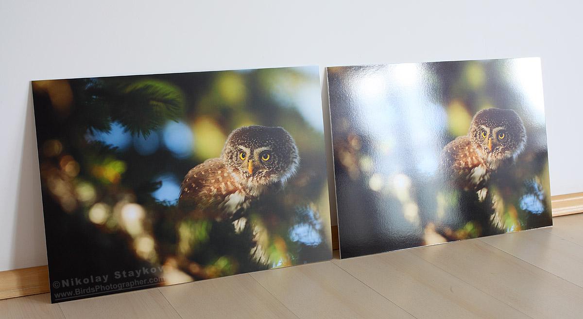 Picturesque Fine Art Prints Birds Photographer Nikolay Birds Matte Vs Glossy Phone Case Matte Vs Glossy Book Cover dpreview Matte Vs Glossy