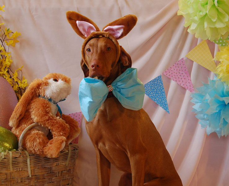 Odin the Easter dog