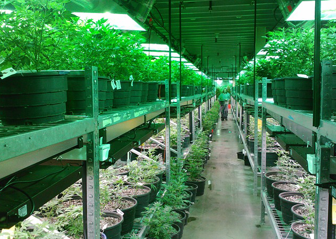The Marijuana Industry is booming