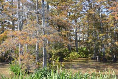 023_swamp.jpg