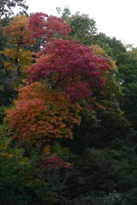 autumn-colors-1.jpg