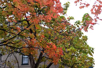 autumn-st-charles.jpg