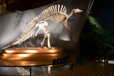 natural-history-museum-1.jpg