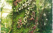 Vertical Garden - Photo by Monique Hartl