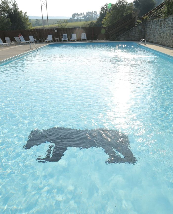 black-bear-summer-pool-sunny-no-people-09