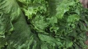 Reviving Wilted Lettuce – Kitchen Hack