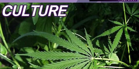 Story cover: Marijuana in the mainstrean