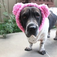 Fuzzy teddy bear ear warmers for dogs