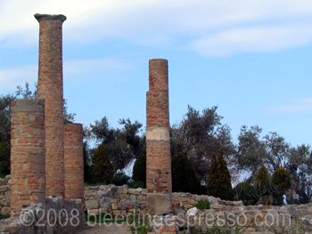 Columns at Tindari, Sicily on Flickr