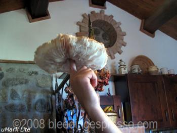 Mushroom pizza on Flickr