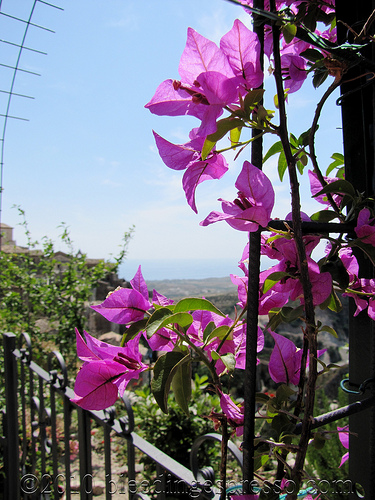 Bouganvillea and the Ionian Sea