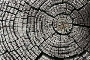Cracked Tree Stump