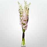 h bloom 3