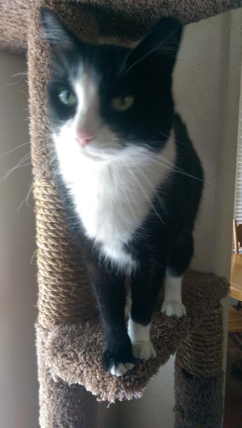 Sylvester (Roebuck)