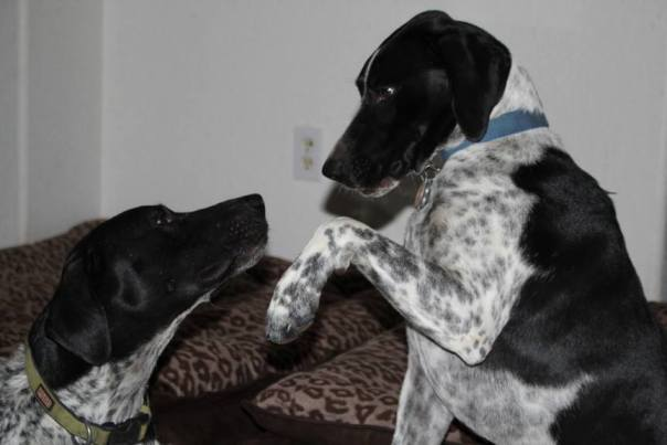 Riggs and Ruger