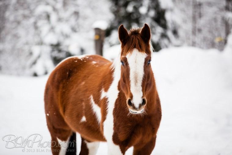 Kierstead-Horses-4795_PROOF