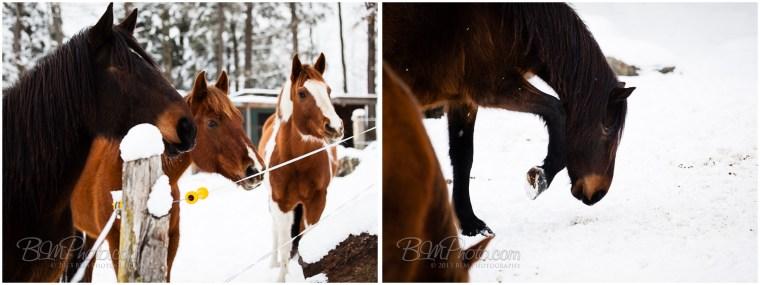 Kierstead-Horses-9