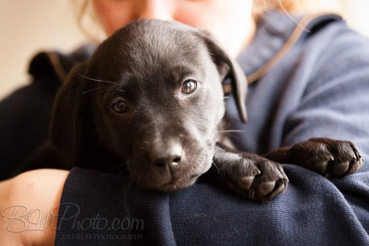 Webber-Dogs-5289