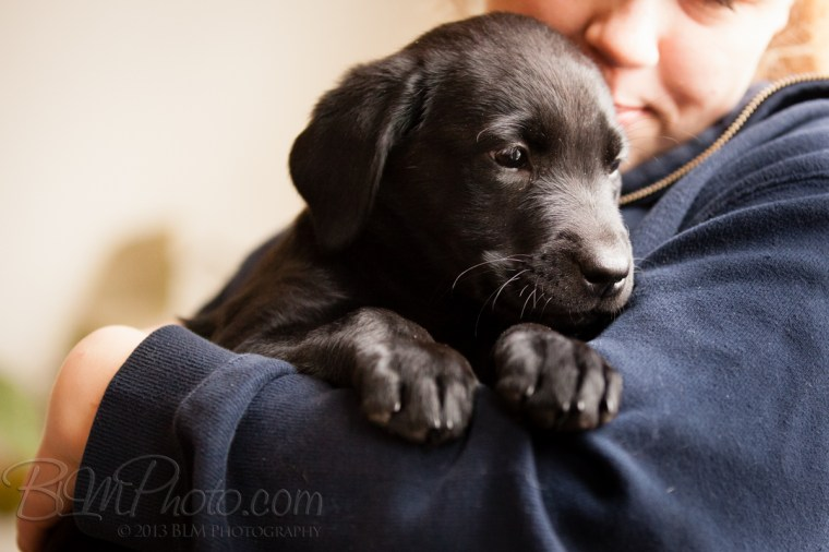 Webber-Dogs-5292