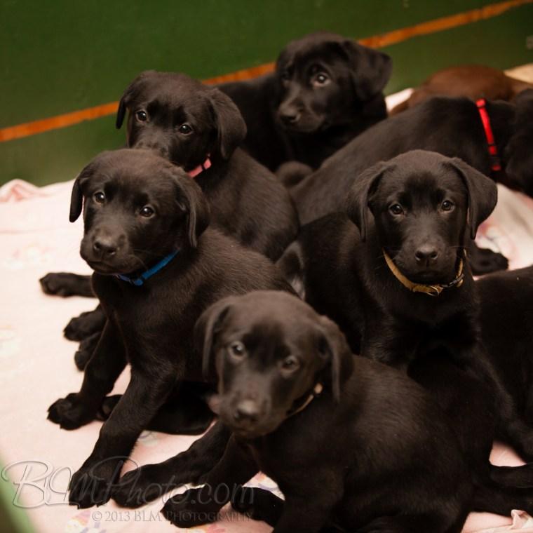 Webber-Dogs-5349