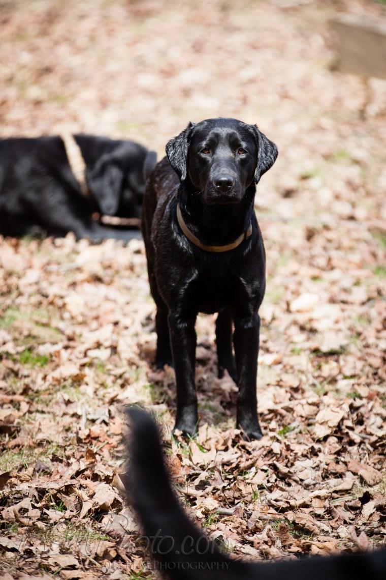 Webber-Dogs-5671