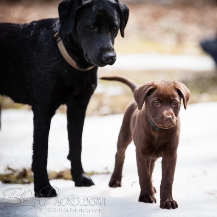 Webber-Dogs-5725