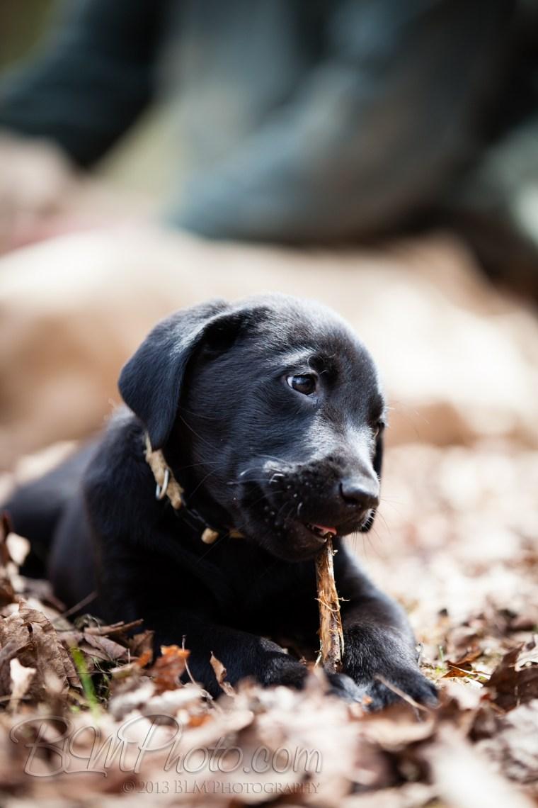 Webber-Dogs-5849