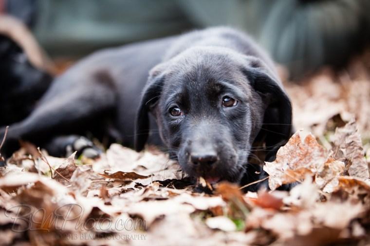 Webber-Dogs-5862