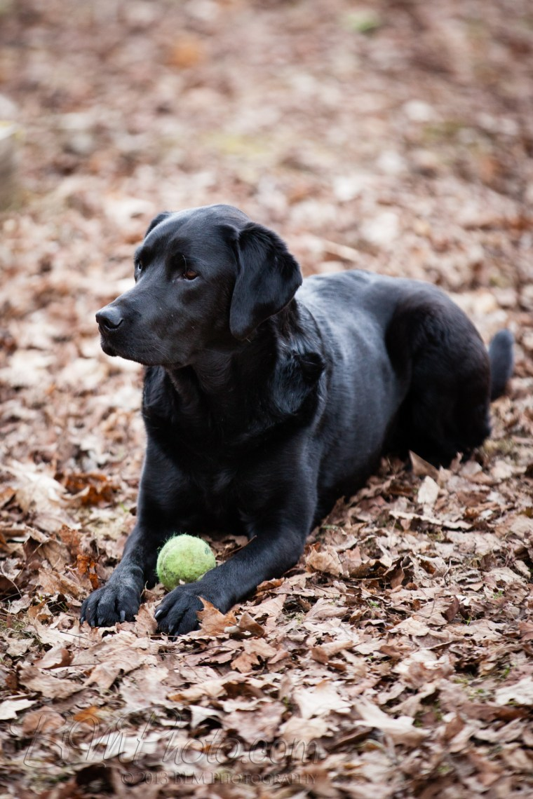 Webber-Dogs-5948