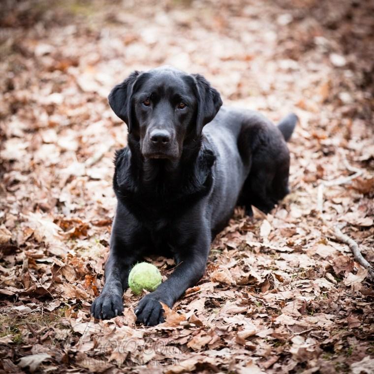 Webber-Dogs-5952