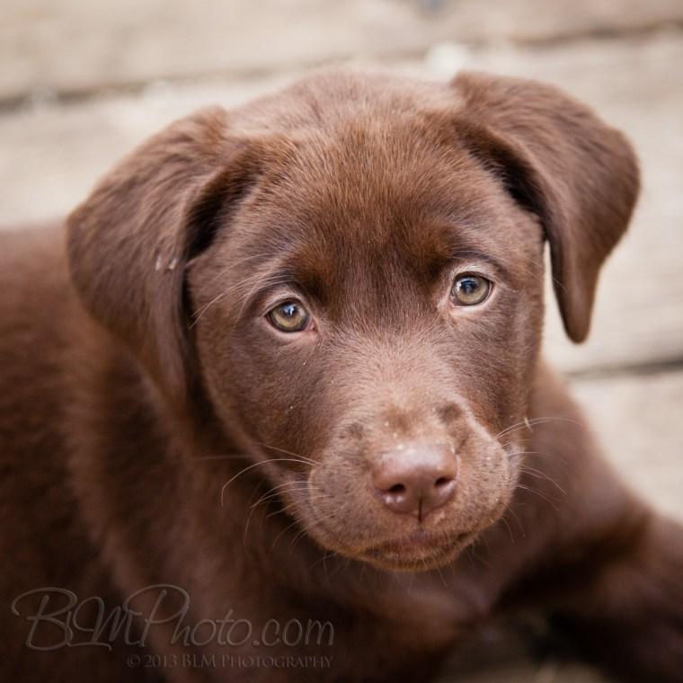 Webber-Dogs-5986-2